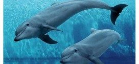 Il Mare: una risorsa per la bioeconomia