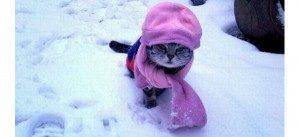 Gatto-Incappucciato-Freddo