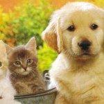 Cani-Gatti-Cuccioli